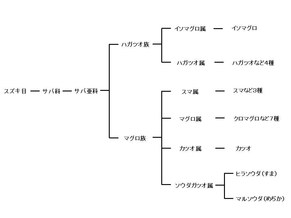 ソウダガツオの系統図